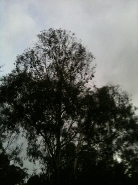 20110422-071647.jpg